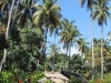 palms-morne_-coubrail-st_-lucia_
