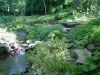 chanticleer-japanese-stream