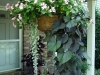 basket-impatiens-sweetpotato-dichondra