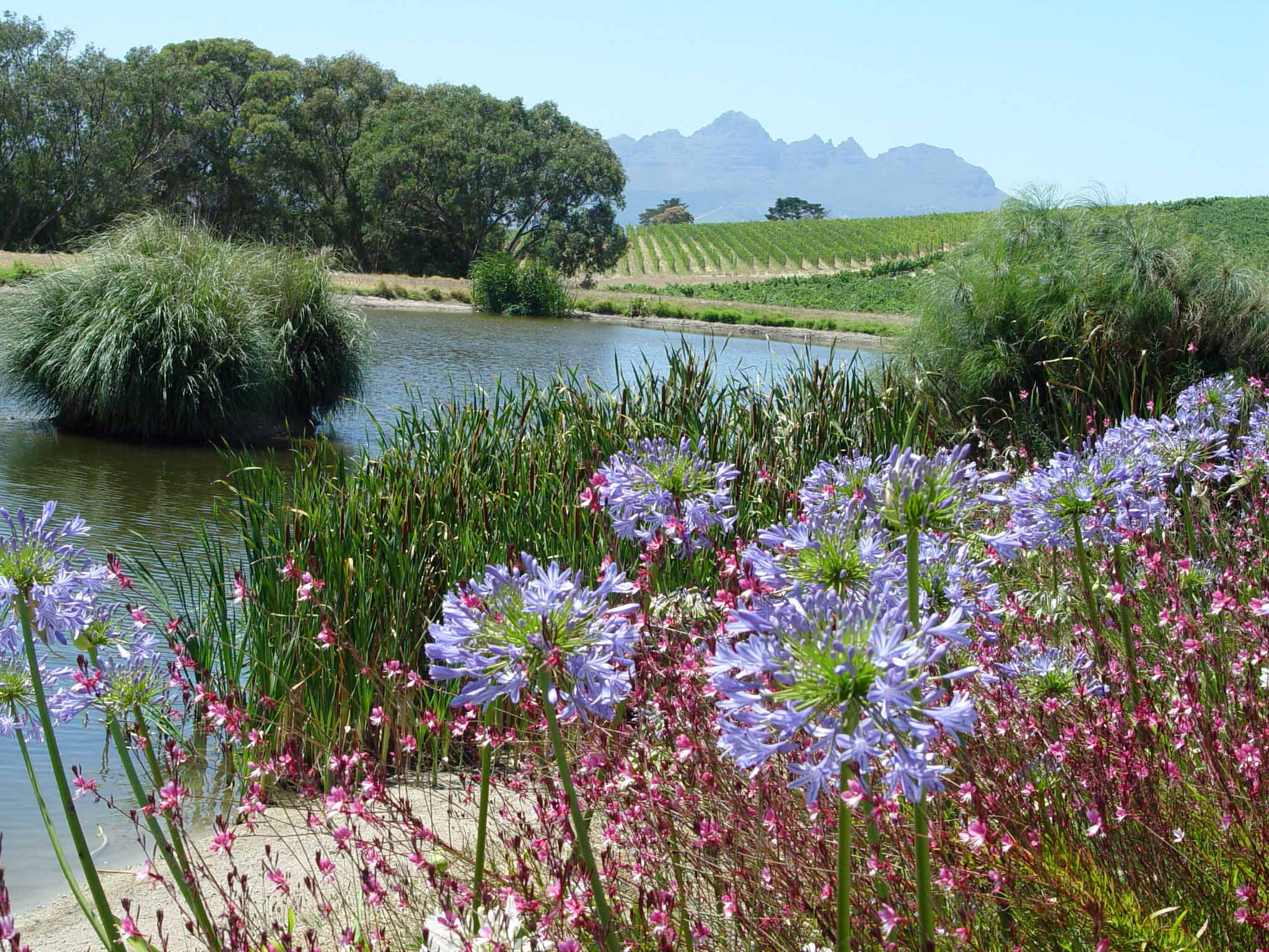 Photo galleries garden housecalls for Jardin winery south africa