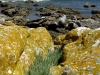 lichens-orange-rocks-oliphants-bay