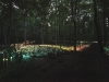 forest-of_-light2_