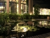 waterlily-pond_