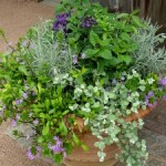 8 Creative Ways to Pot Garden