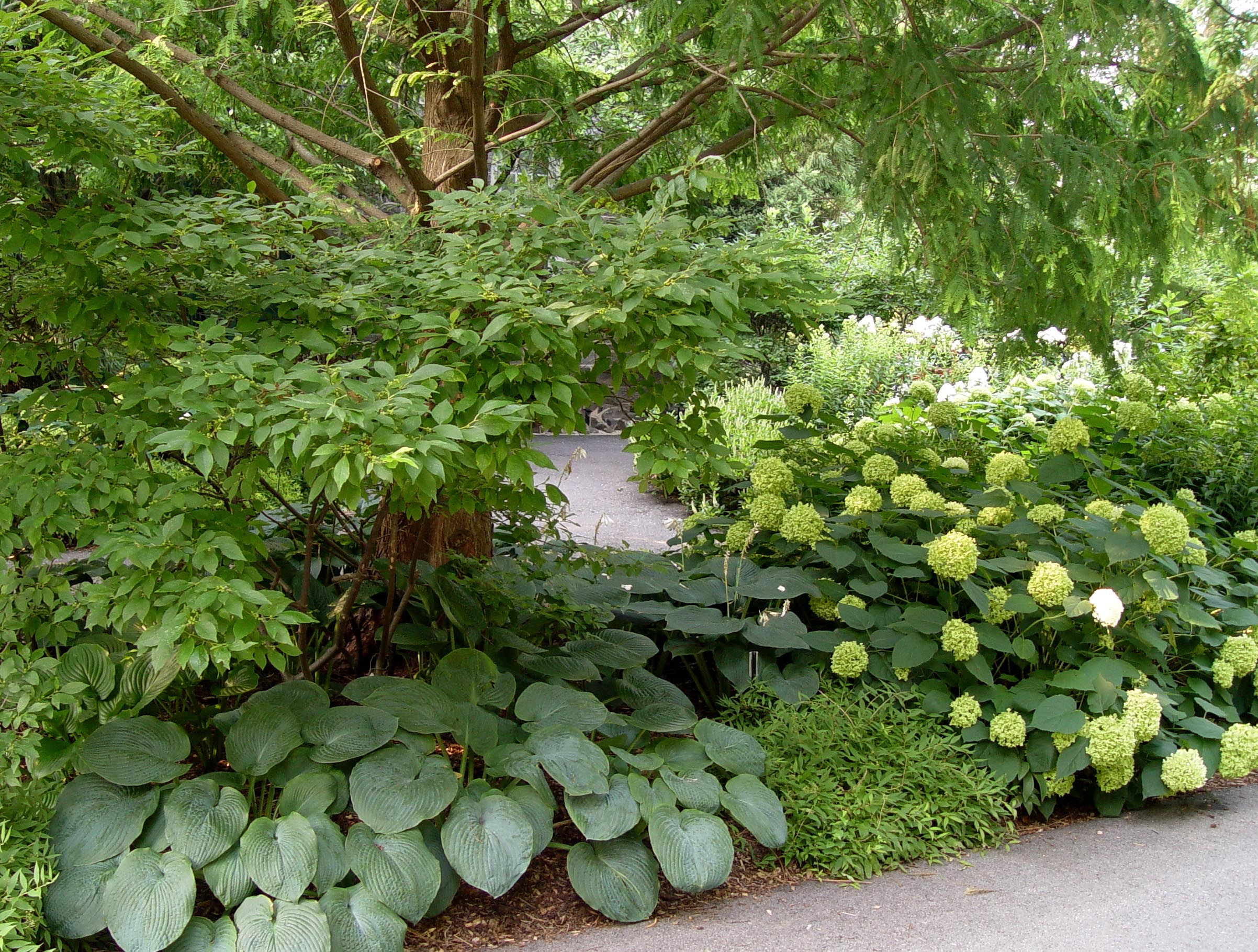 shade garden ideas hostas photograph