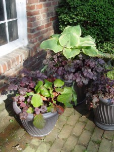 These pots are filled with nothing but perennials: hosta, coralbells and bergenia.