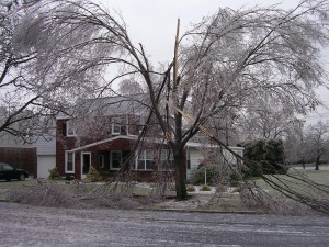 A nasty ice storm cracked apart Rich Wengert's Chinese elm tree in Lebanon. This one survived, but it lost about a third of its limbs.