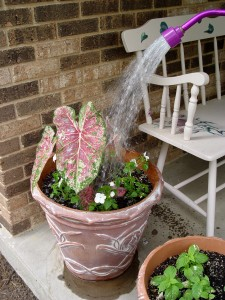 Keep those pots watered!