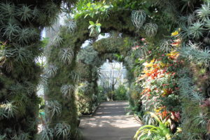 Archway of tillandsias inside Stowe's Orchid Conservatory.
