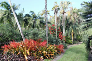 Palms and bromeliads at Fairchild.