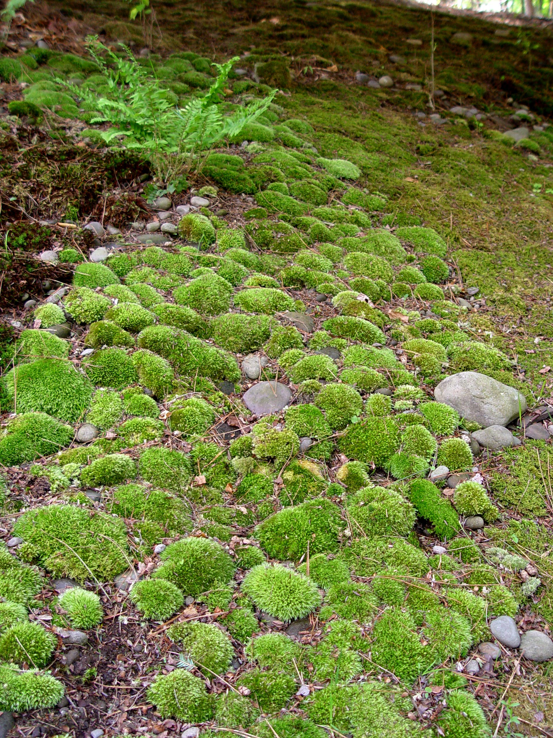 Should You Kill Moss?