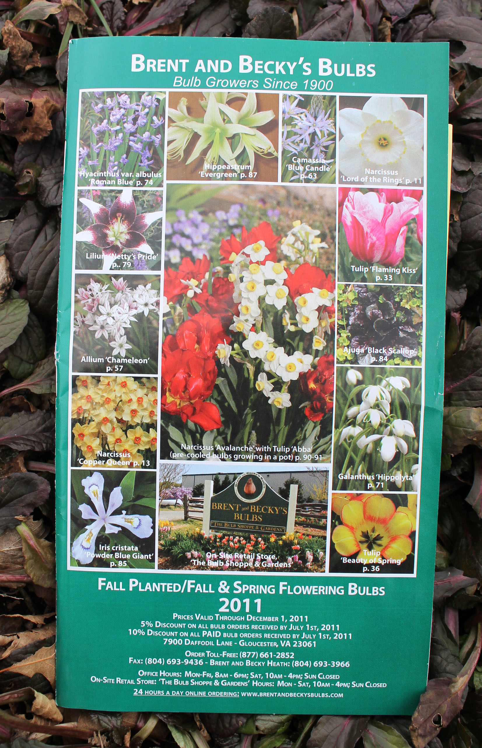 10 Favorite Garden Catalogs Garden Housecalls