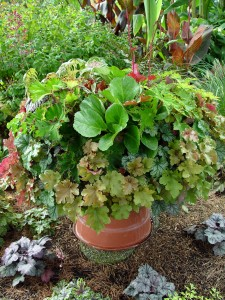 Colorful-leafed perennials are fair game for pots.