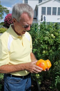Joe Mateer inspecting his 'Mr. Stripey' tomatoes... before they go in a marked bag, of course.