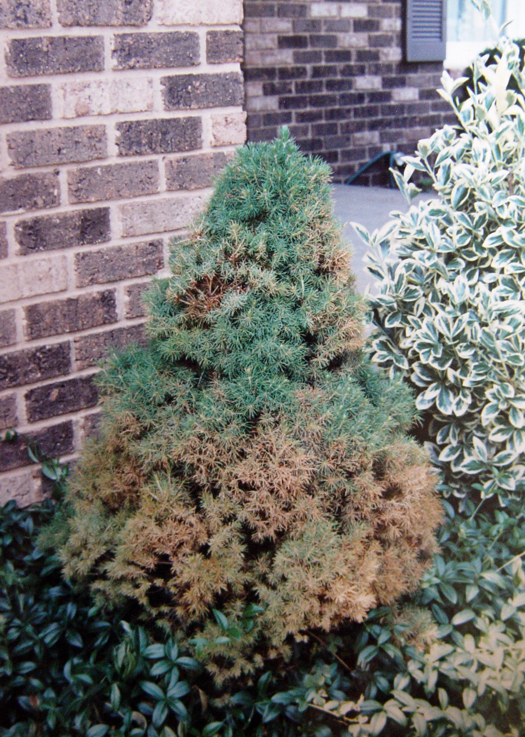 how to kill unwanted trees and shrubs