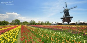 Holland, Mich.'s, Windmill Island with tulips in bloom.