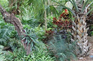 The tropical fern garden at Marie Selby Botanical Gardens in Sarasota, Fla.