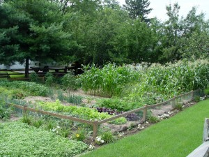 It's possible to grow a fair number of vegetables in a less-than-full-sun location.