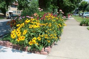 Flowers growing happily along a front curb.