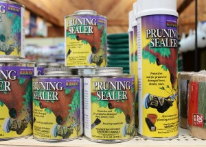 Tree paint and similar wound gunk can be counter-productive.