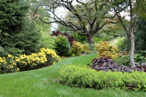 Fall is an excellent time to plant and improve the landscape.