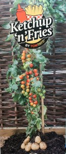 The new 'Ketchup 'n' Fries' TomTato grows cherry tomatoes above ground and potatoes below on one plant.