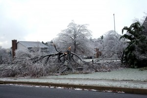 "Pruning to think out excess growth can reduce ""wind throw"" and make a tree less likely to lose limbs in storms."
