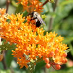 Put Some Buzz in Your Landscape by Helping Pollinators