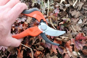 Bypass pruners make cleaner cuts than anvil-type pruners.