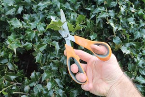 Garden scissors are sturdy enough to cut twine and even small branches.