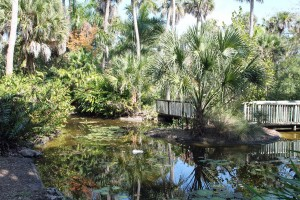 McKee Botanical Gardens has lots of water and lots of tropical trees.