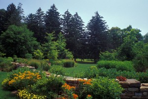 An example of a naturalistic design using native plants, by Pennsylvania designer Larry Weaner.