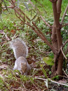 Squirrels have nothing better to do all day than figure out where their next meal is coming from.