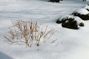 Snow is one of the best winter-damage preventers for plants... once it's safely on the ground.