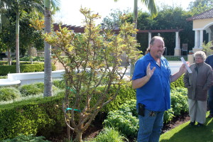 Hollis Gardens gardener Stacy Smith shows us the $30,000 frankincense tree.