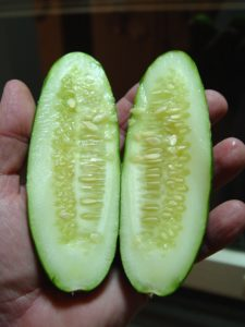 Cucumber seeds are smaller and much more tender when you pick fruits before full size.