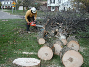 This is happening to ash trees all over the eastern and central United States, thanks to the emerald ash borer. Credit: www.emeraldashborer.info