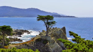 California's Lone Cypress, likely America's most photographed tree.