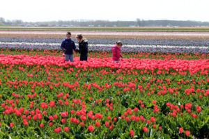 The VanHaaster kids walk in their dad's tulip farms that we visited on our Holland trip.