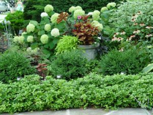 Container plants aren't just for use on decks and patios. They add colorful focal points within gardens as well.