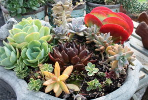 The succulent trend is showing no signs of abating.