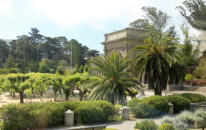 Yes, those are palm trees growing in San Francisco's Golden Gate Park.