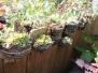 Garden Walk Buffalo 2012