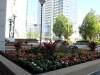 Chicago.planter