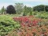 ChicagoBot.rose_.garden2