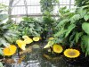 Garfield.Park_.Chihuly.lilies