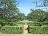 Morton.Arb_.hedges