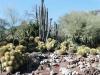 18Huntington.desert.garden.cactuses