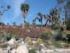 1Huntington.desert.garden