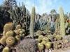 2Huntington.desert.garden.cactuses